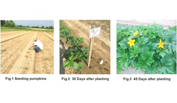 Effects of Organic Biofungicides vs. Conventional Fungicides on Powdery Mildew in Pumpkins